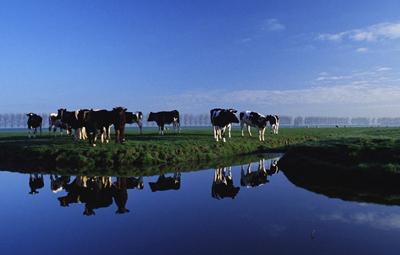 新西兰为更好发展畜牧业开展治理淡水资源